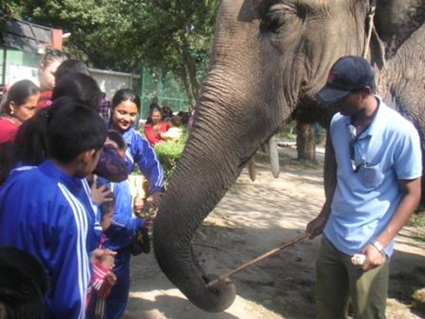 The keeper tells about the elephants - and we get to pat them!